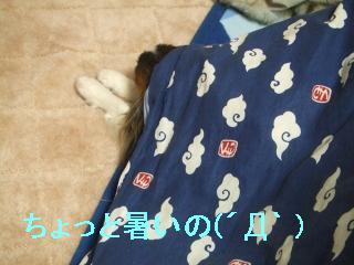 2DSCsu5.jpg
