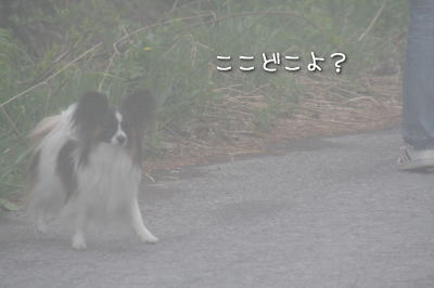 3IMG_2788.jpg