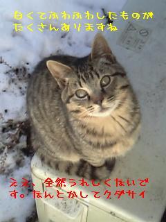 20060122231759.jpg