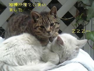 20060123222507.jpg