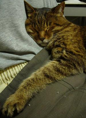 世話人につかまって寝る