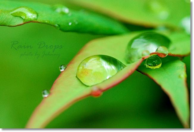 DSC_000620100629-1.jpg