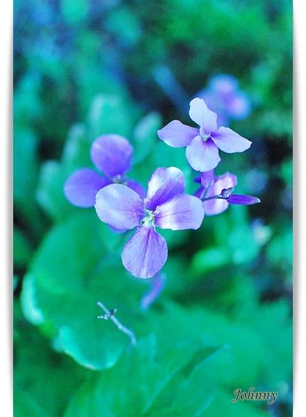 DSC_001420100419flower7.jpg