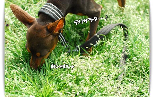 DSC_003520100419jin2.jpg