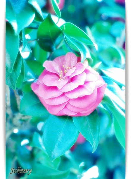 DSC_004720100417flower4.jpg