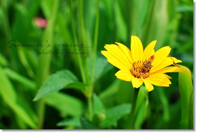 DSC_004920100626-4.jpg