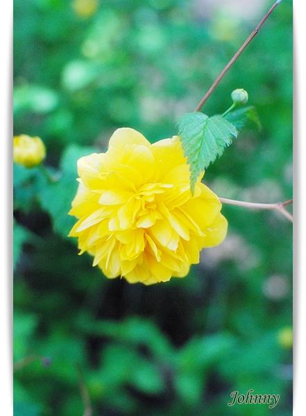 DSC_006520100419flower1.jpg