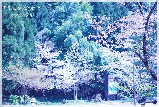 DSC_054720100506-14.jpg