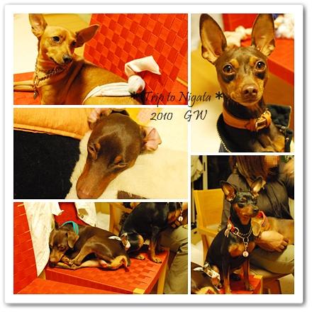 cats20100505-5.jpg