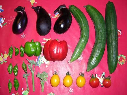 8月12日の収穫