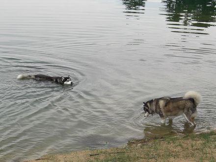 泳ぐ北斗と浸かる健太
