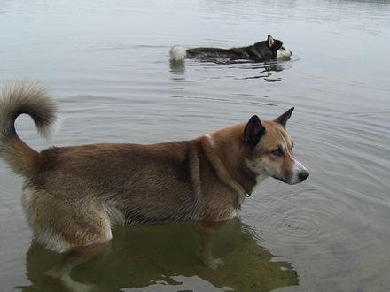 池に浸かるジョンと北斗