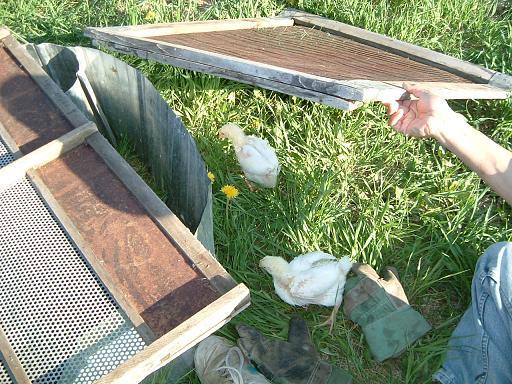 chick062120092