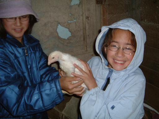 chickmaya062220091