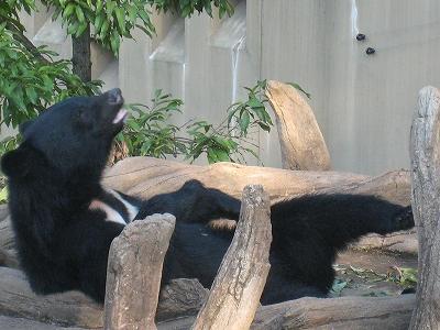 上野動物園クマ
