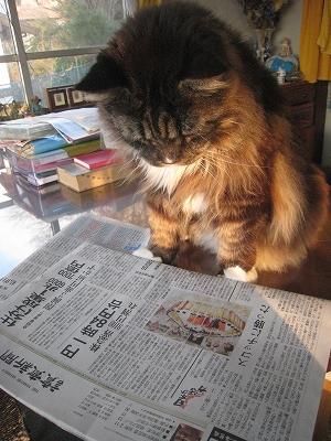 サクラ新聞