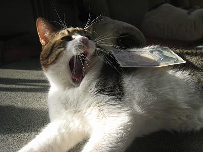 楓1000円