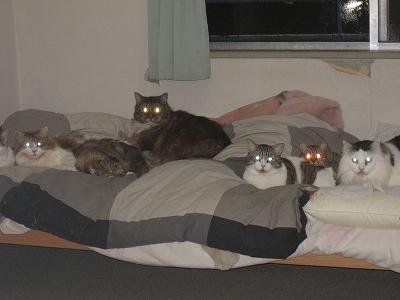 不気味な猫たち