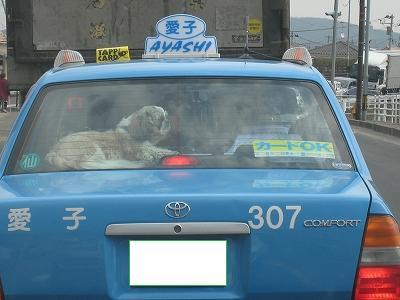 犬タクシー