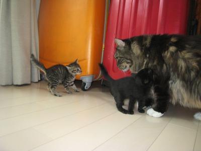 子猫と桜1