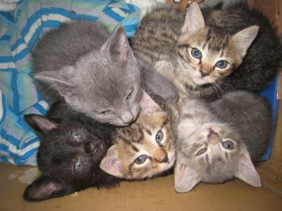 子猫たち4
