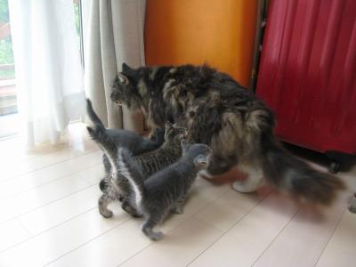 子猫と桜2