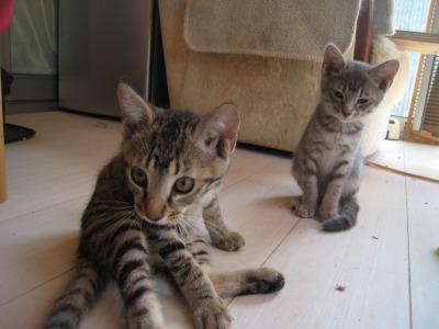 子猫たち711