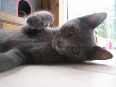 子猫パンチ1