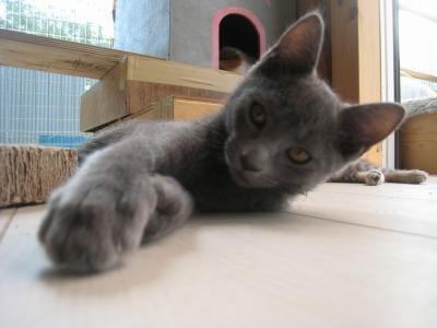 子猫パンチ2