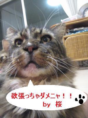 桜ユロ円ポジ