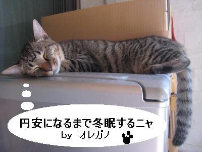 オレガノ睡眠