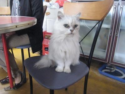 光華飯店猫