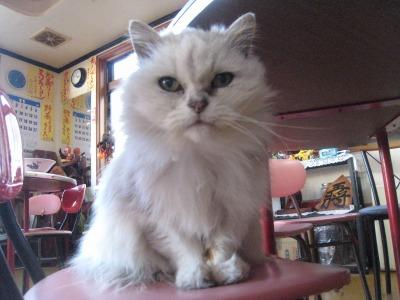 光華飯店猫長老