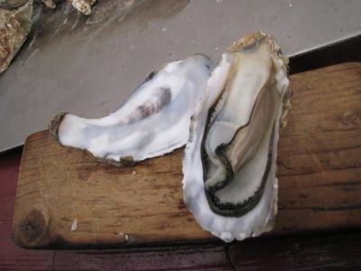 牡蠣プリプリ
