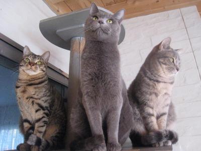 子猫三人衆