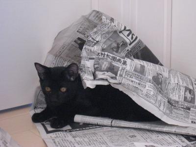 マロー新聞紙