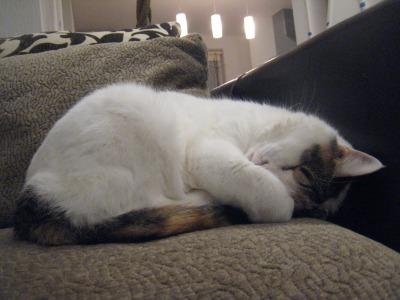 風花寝てる