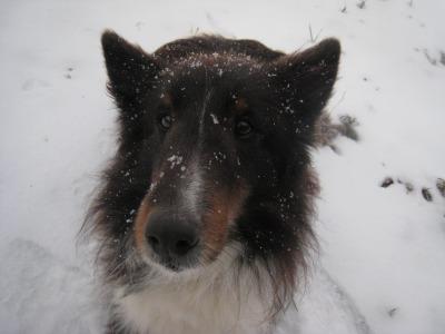 蘭雪はしゃぐ