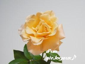 ジャストジョイ20080906-5