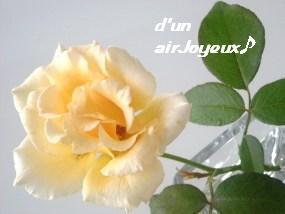ジャストジョーイ20080930-1