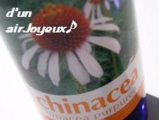 K-Echinacea2