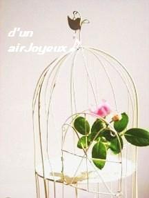 birdcage-rose2008_08_29