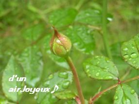 cocogarden081001-1c