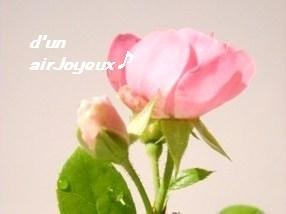 duetto-rose3