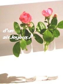 duetto-rose1