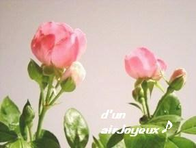duetto-rose2