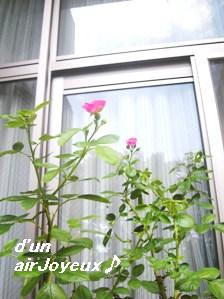 terrasse-rose080923