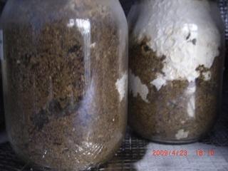 菌糸ビン1