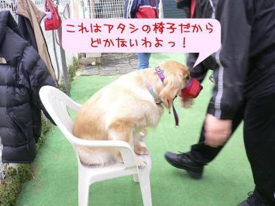 椅子は私のもの♪