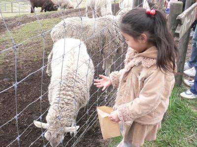 羊にエサをあげるAちゃん
